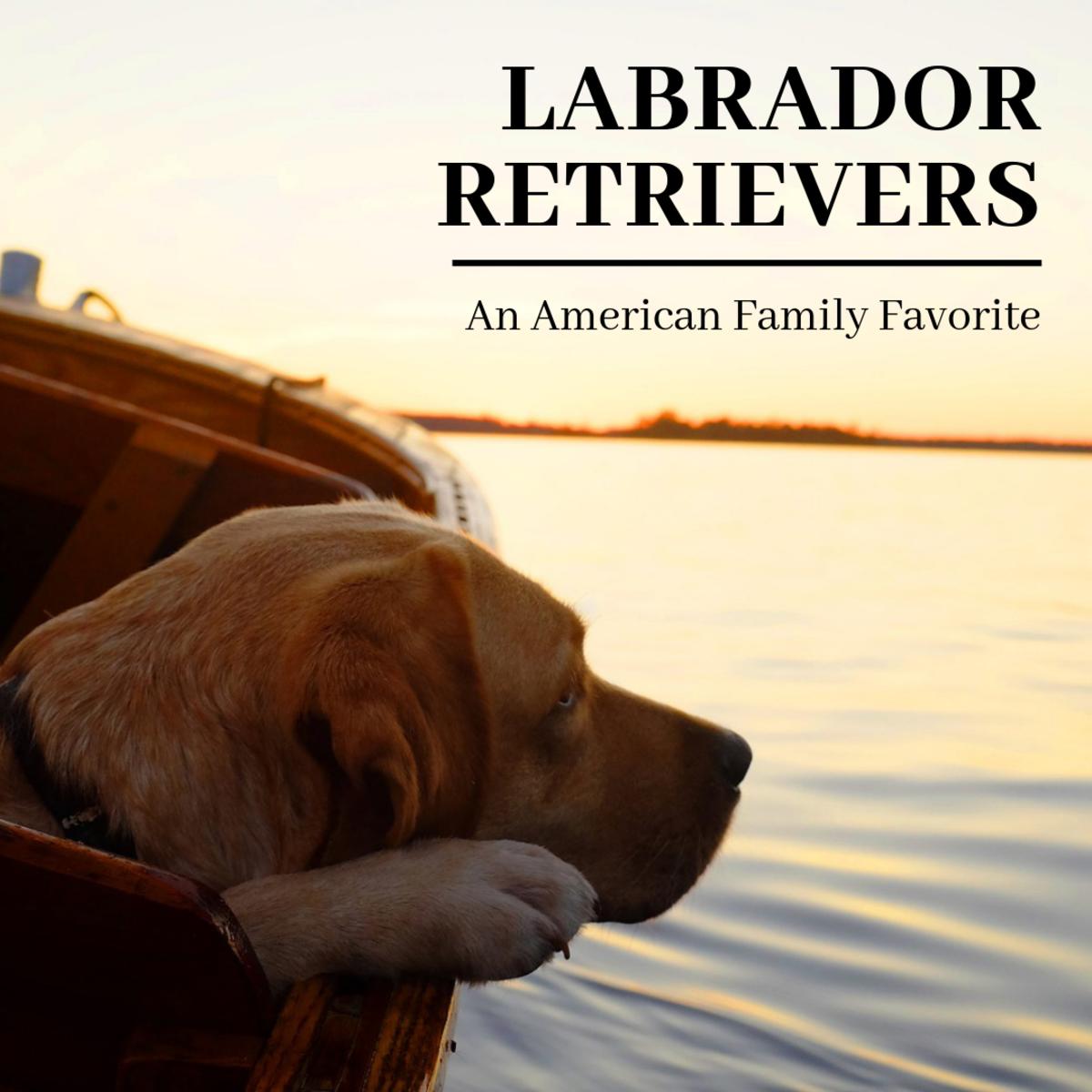 Labrador Retriever Breed Information: The Doggie Matchmaker