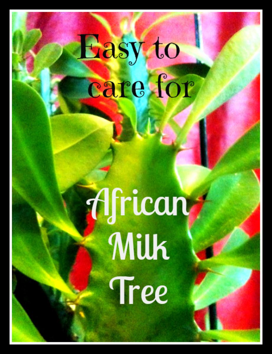 Providing Tree And Plant Care: How To Care For And Propagate Euphorbia Trigona