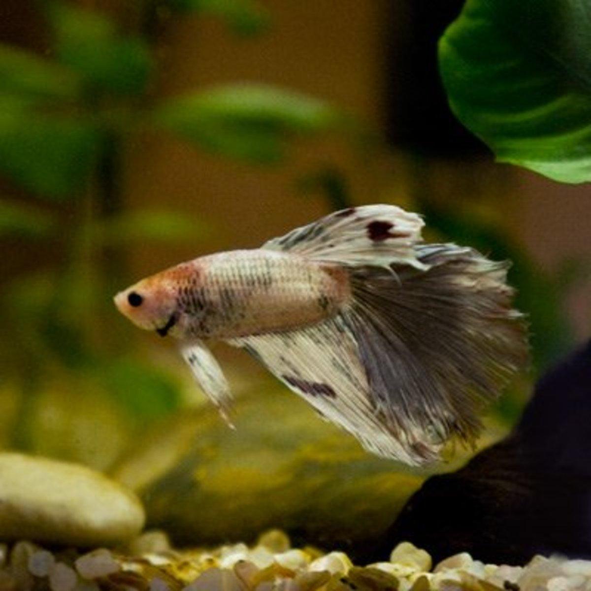 Best heaters for a 5 gallon freshwater aquarium fish tank for Betta fish water temp