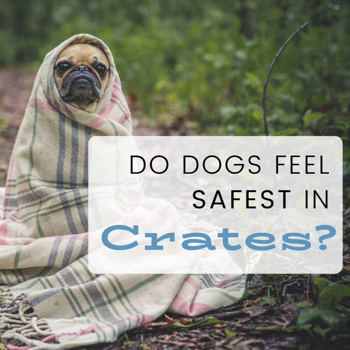 Are dogs really den animals? To crate or not to crate?