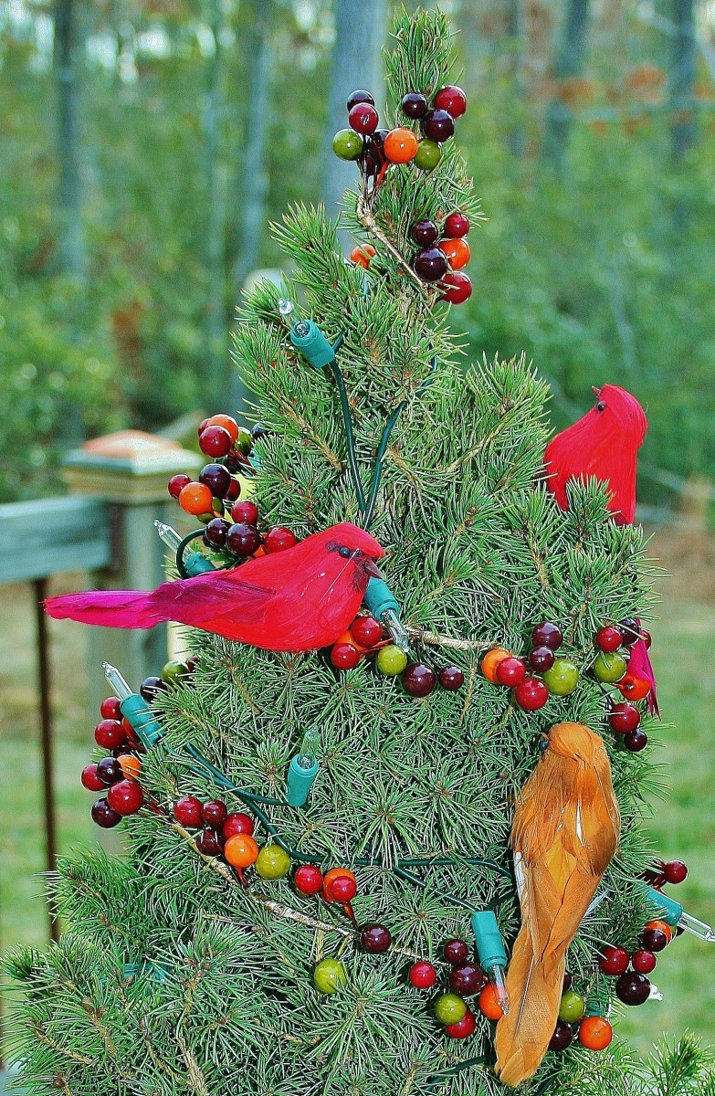 how to keep a mini christmas tree alive after the holidays - Mini Real Christmas Tree