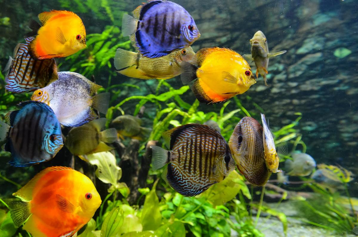 10 Signs of Stress in Tropical Fish
