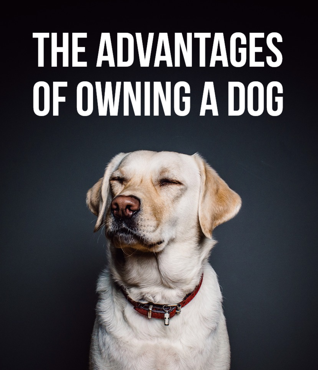 If you want to find out the main positives of owning a pet dog, read on...