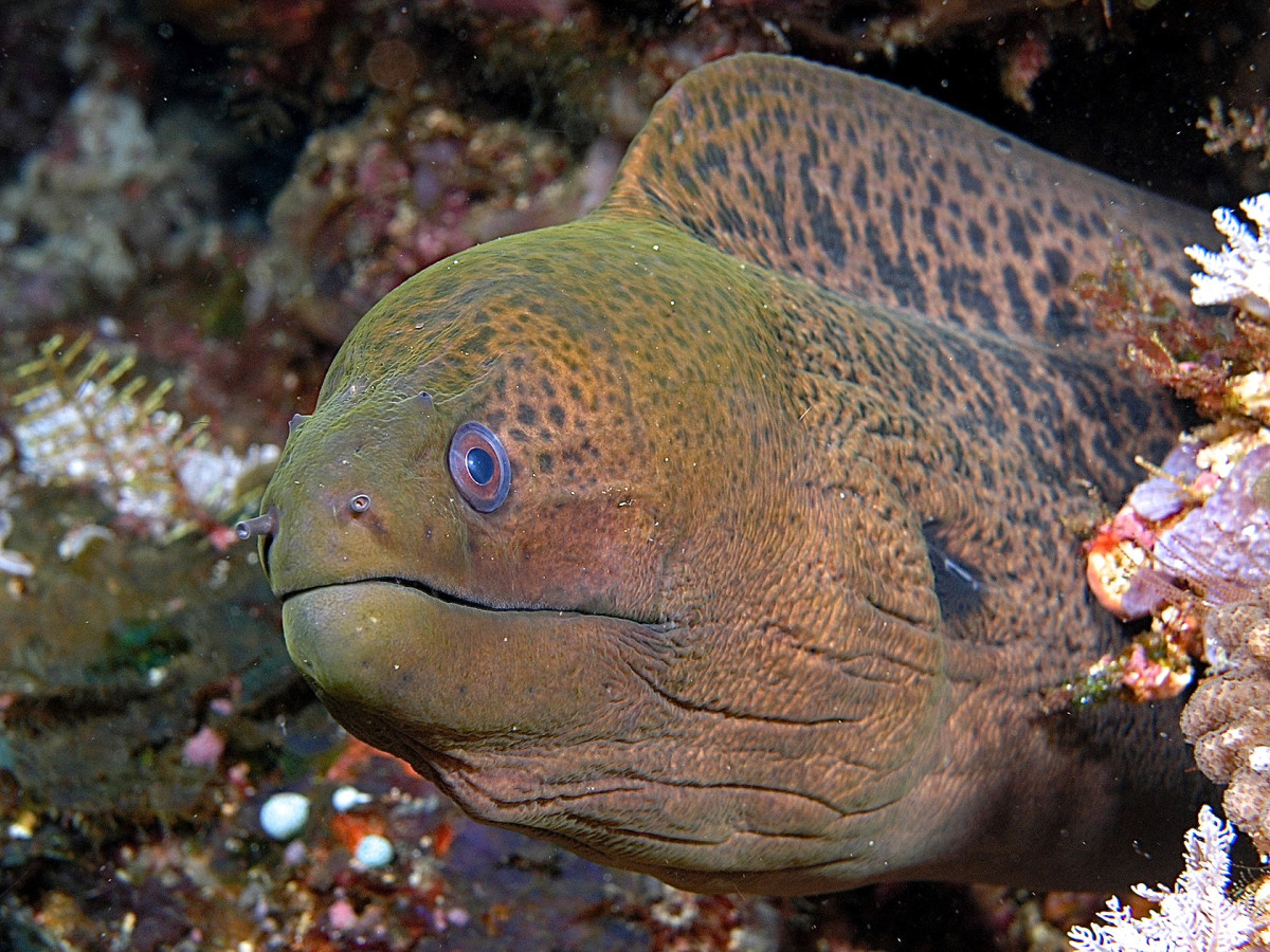 Moray and Wolf Eels: Interesting Fish Facts