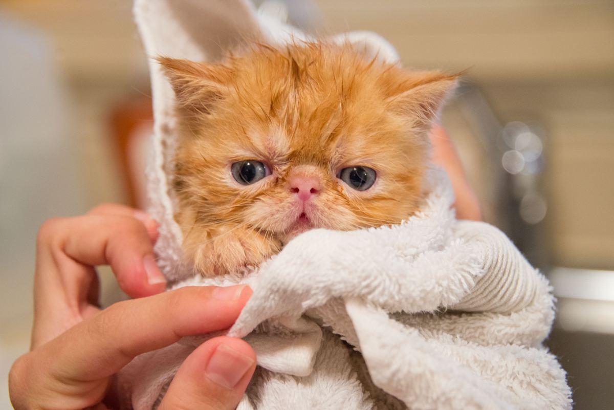 How to Bathe a Cat, Drama-Free