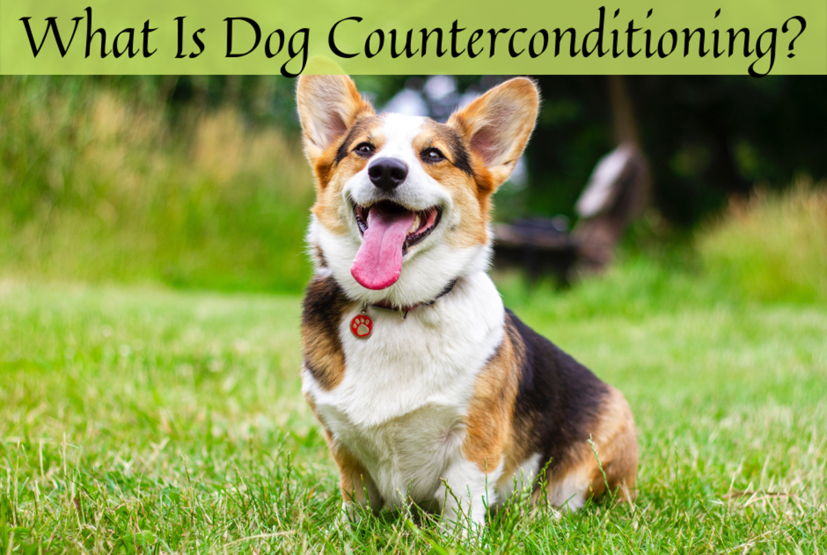 Read on to learn how to use counterconditioning on your dog.
