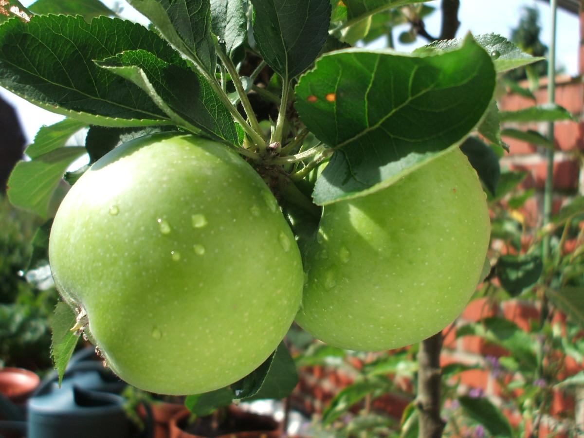 Crock-Pot Cinnamon Apples