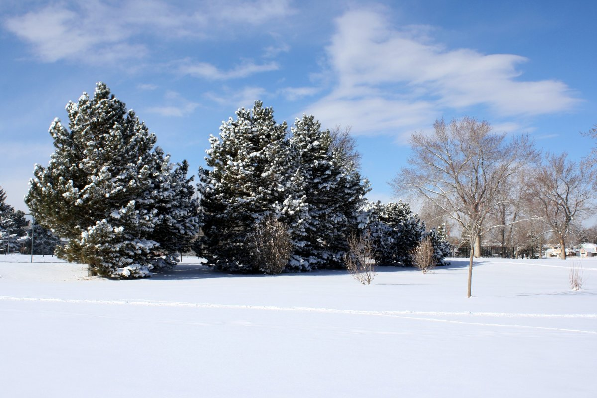 Young trees require winter protection to prevent injury.