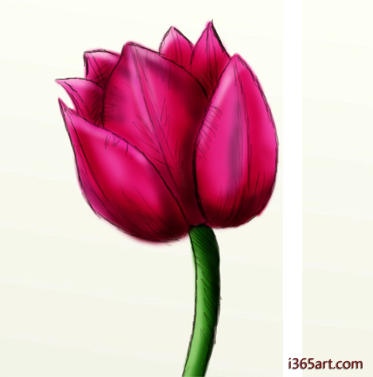 How to Draw a Beautiful Tulip