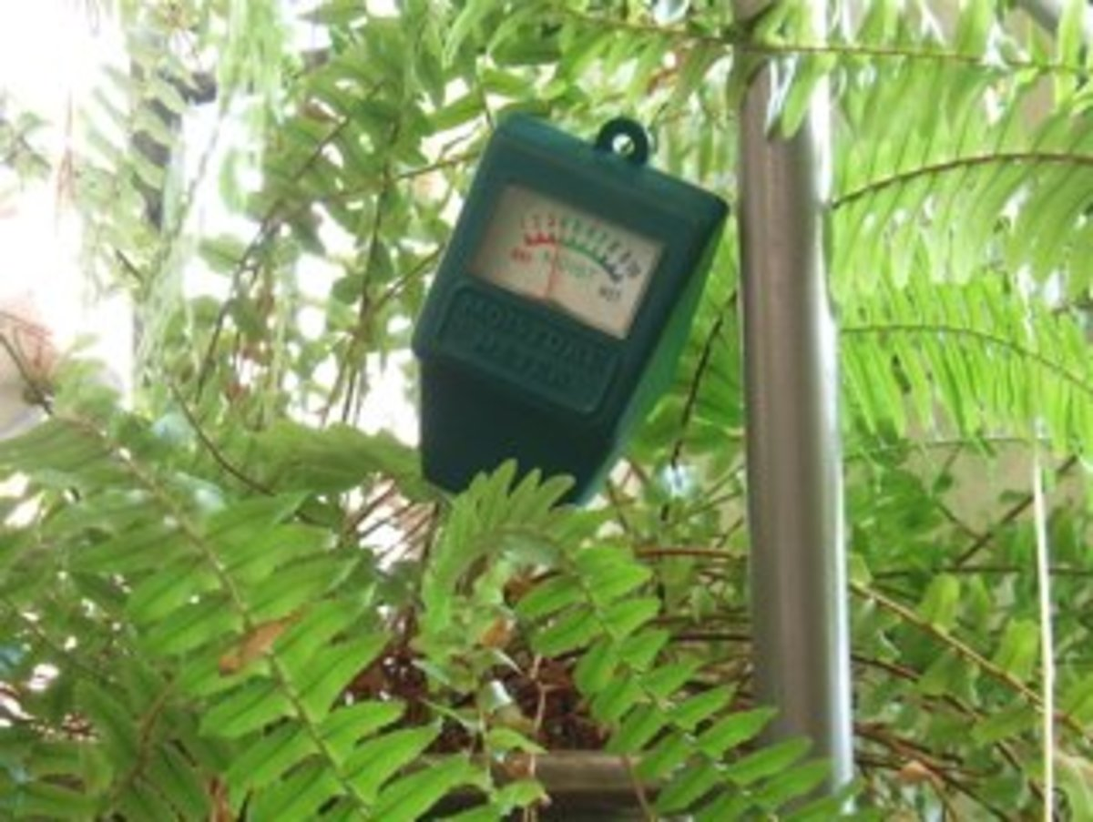 A plant moisture meter shows whether a pot's soil is dry (red), at a good level (green), or too wet (black).This fern probably needs watering now.