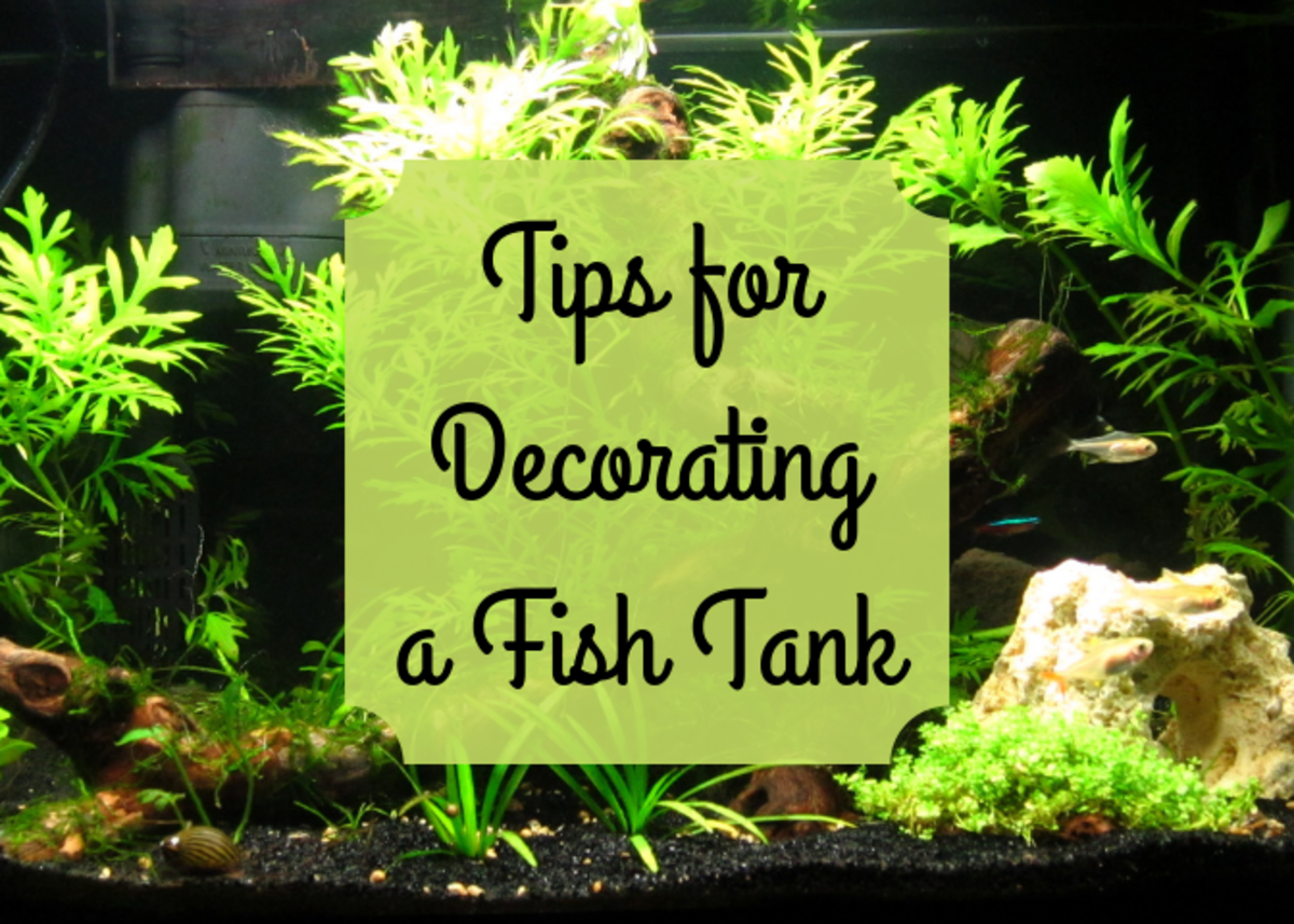 How to Pick Decorations for a Fish Tank