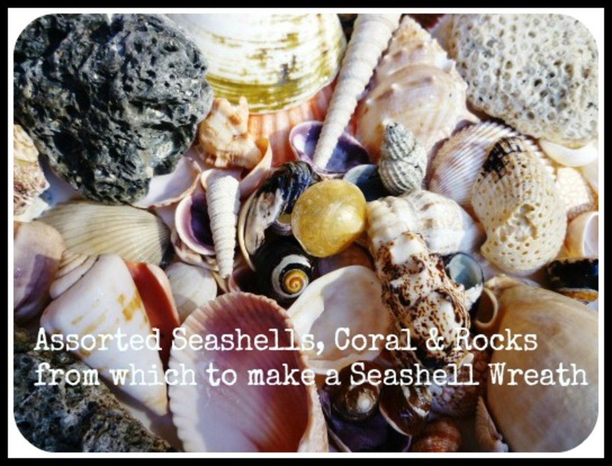 Seashells, rocks and coral picked up from a Florida beach.