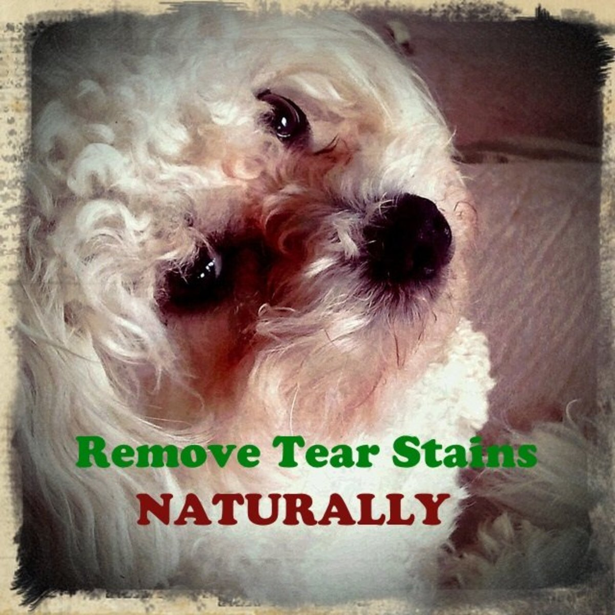 Your dogs tear stains can be removed naturally.