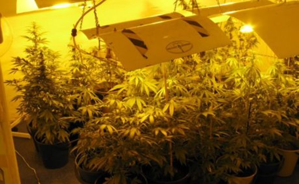 Marijuana - hydroponic's set up