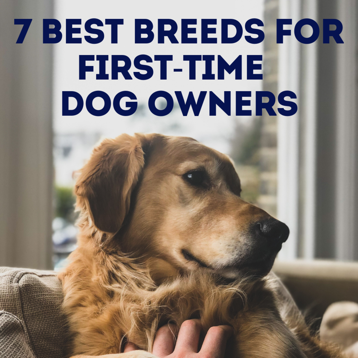 7 Best Dog Breeds for First-Time Owners