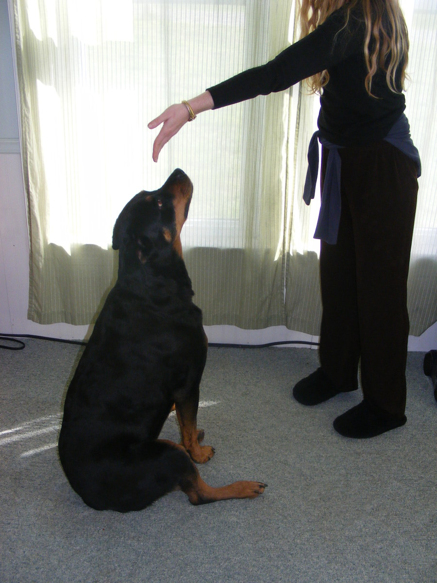 See Your Vet If Your Dog Has Trouble Sitting