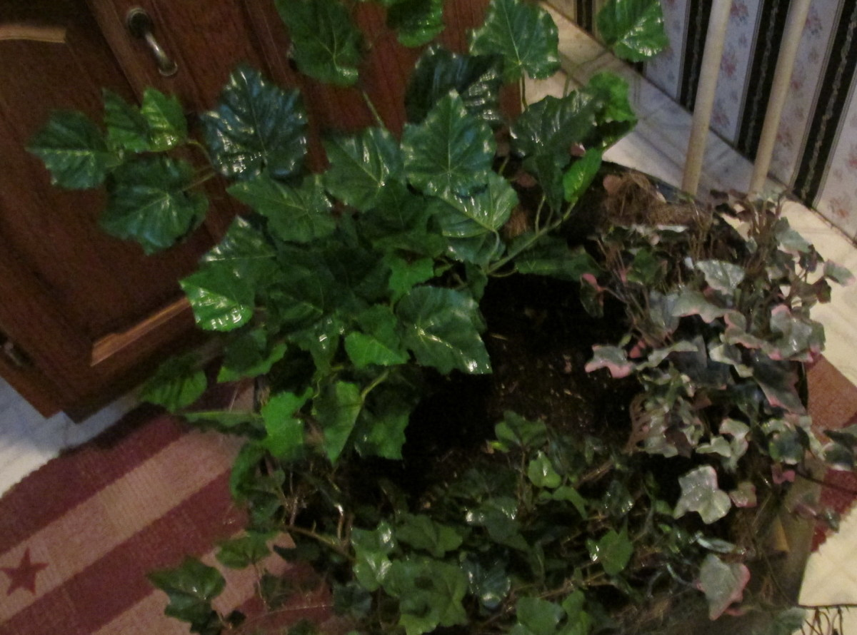 Hanging Nesting Basket planted with various kinds of ivy.