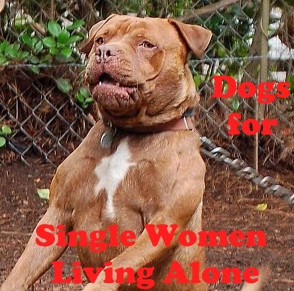 5 Best Dog Breeds for Single Women Living Alone