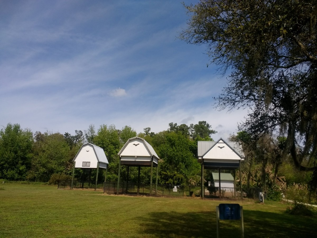 The two bat barns and bat house. The original U.F. Bat House was built in 1991, There are now three structures for the bats to live in.