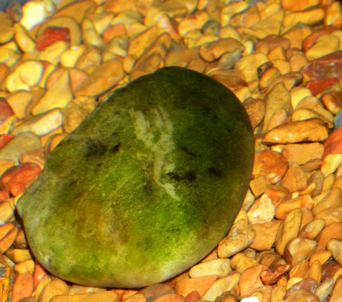 Algae growth is typical in aquariums, but a sudden algae bloom can turn your water a murky green.
