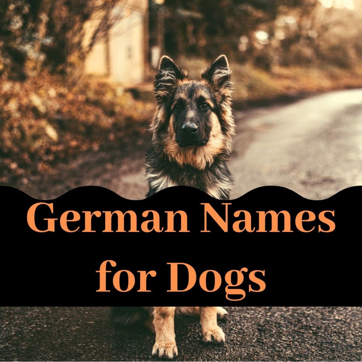 Great Dog Names From Germany for Males and Females