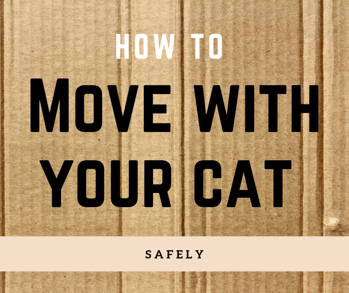 Moving your cat to a new home can be stressful. Follow this guide to make it as easy as possible (for the both of you)!