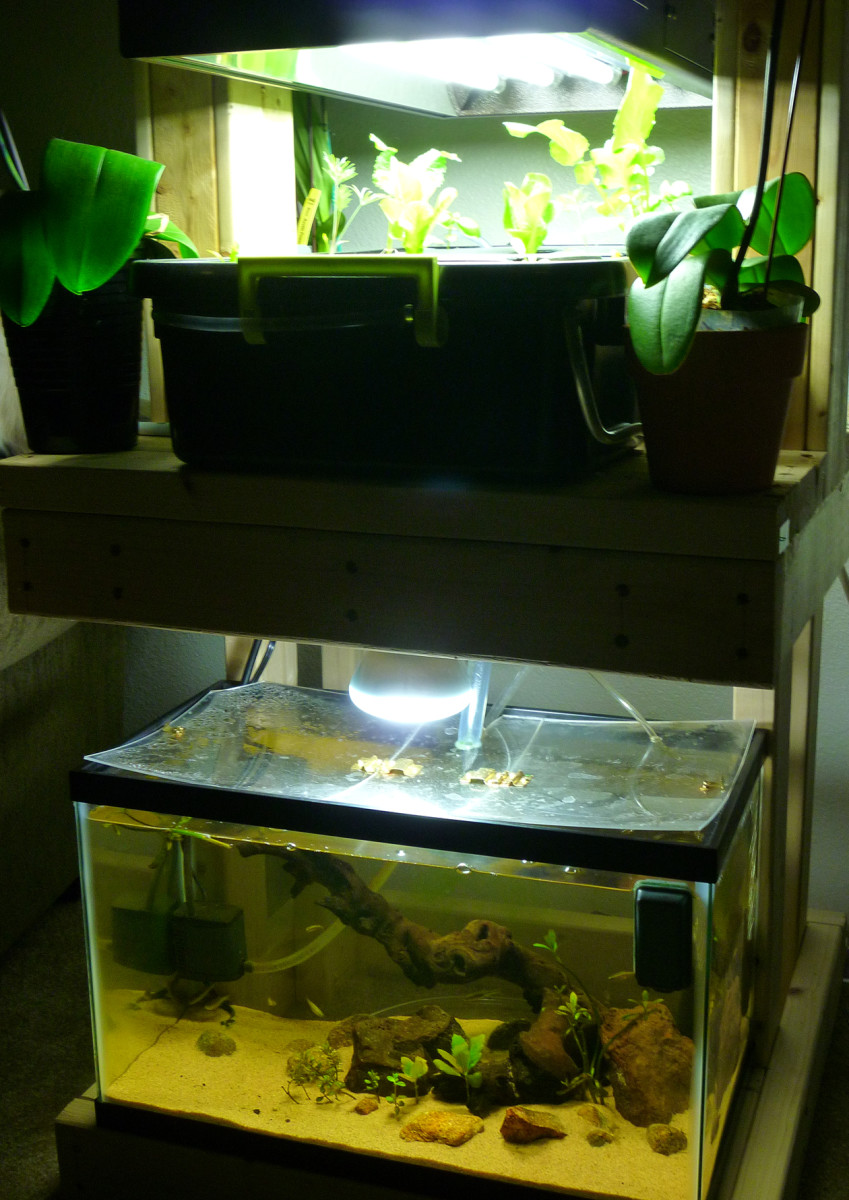 Aquaponics with 10 gallon tank details waters sistem for Best fish for aquaponics