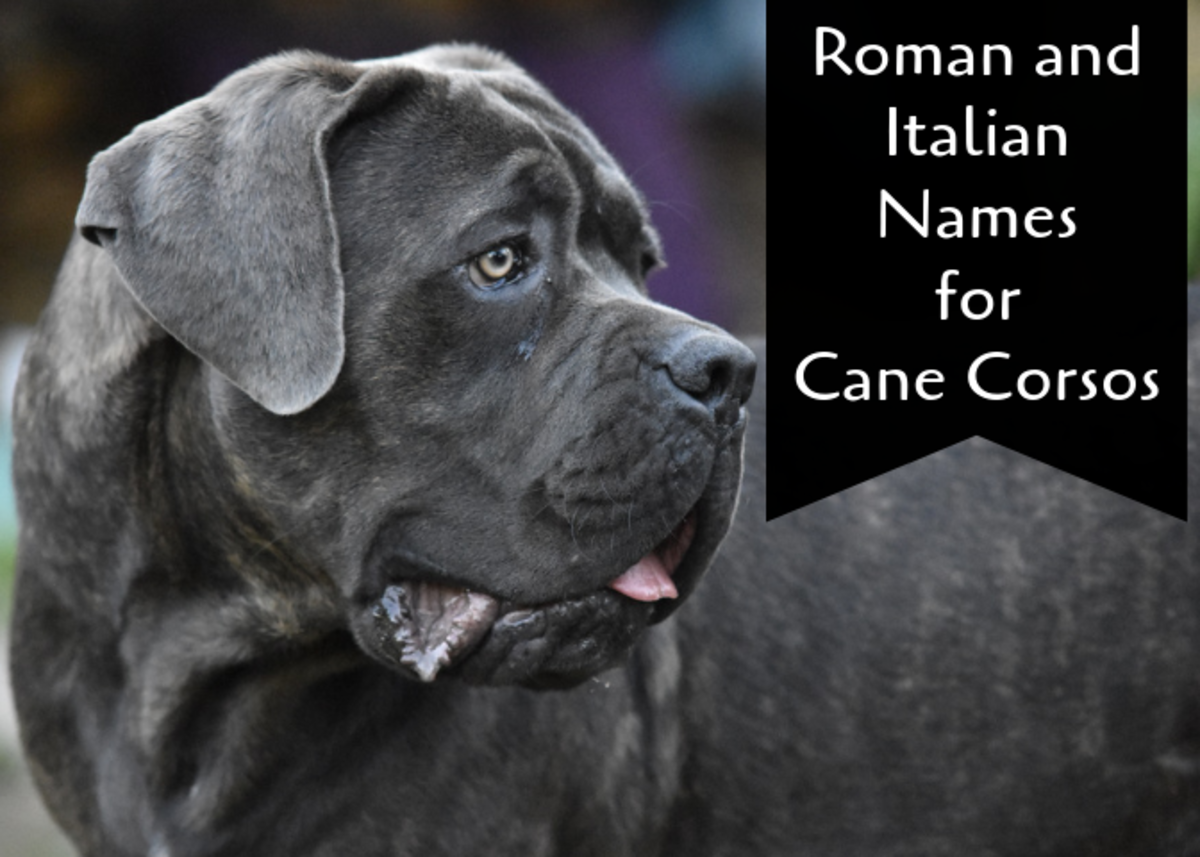 See name ideas for your Cane Corso inspired by ancient Rome and modern-day Italy.