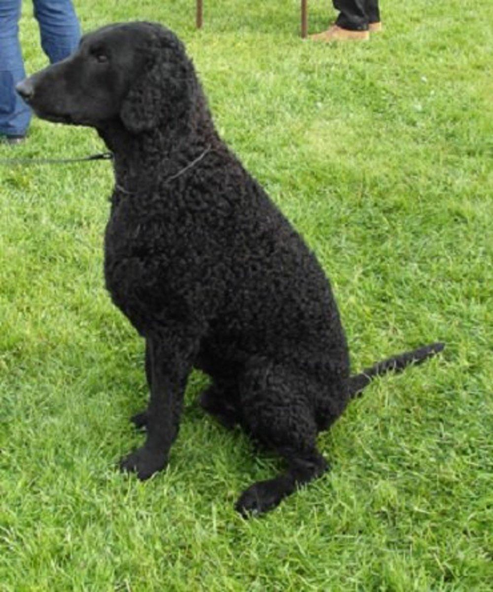18 English Dog Breeds