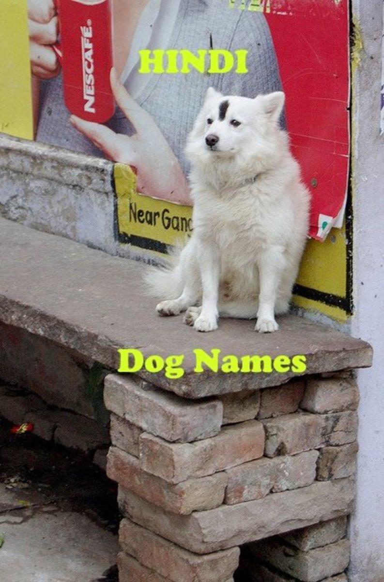 Hindi dog names.