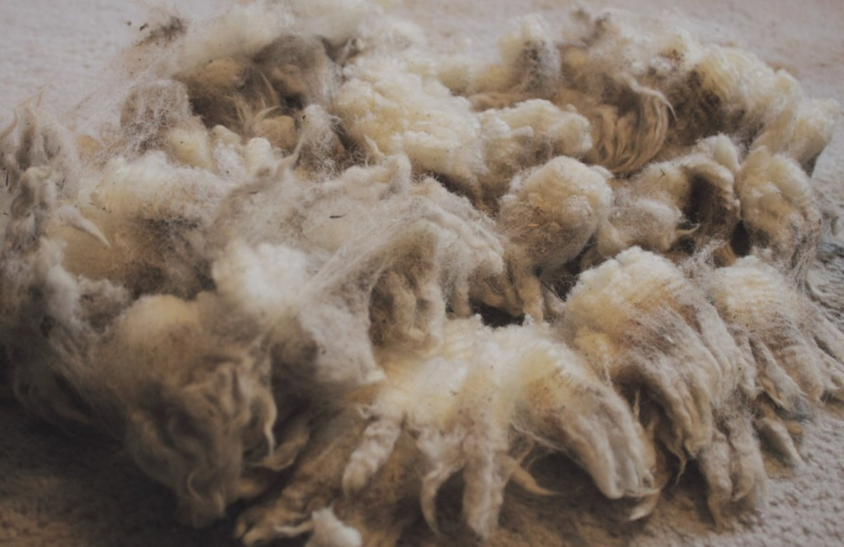 How to Clean Raw Wool for Crafts