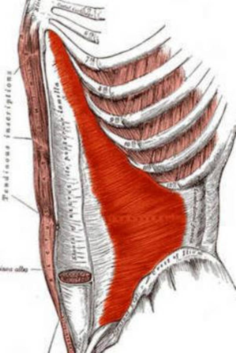 How to Get Flat Abs with TVA (Transversus Abdominis) Exercises