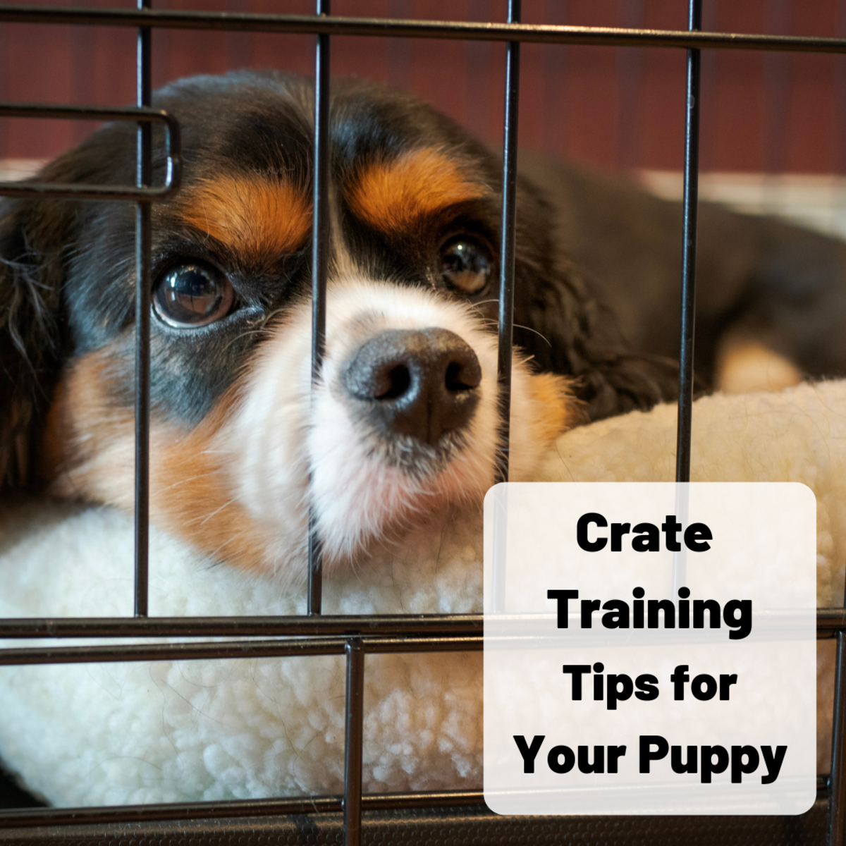 Learn how to help your puppy see his or her crate as a safe and comforting place.