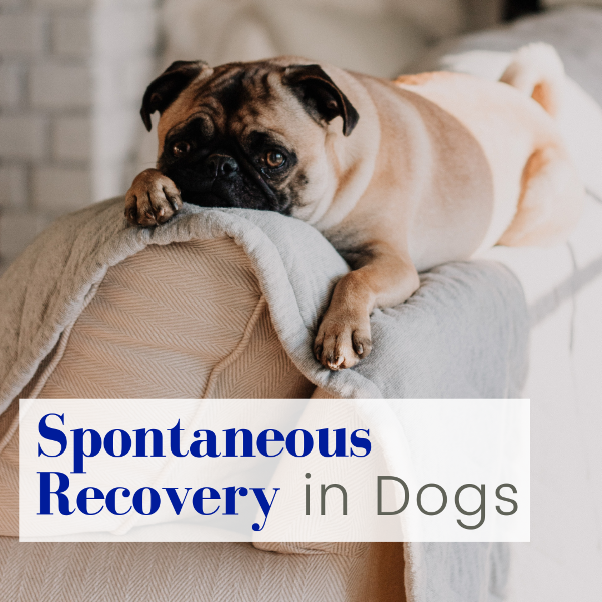 Understanding Spontaneous Recovery in Dogs