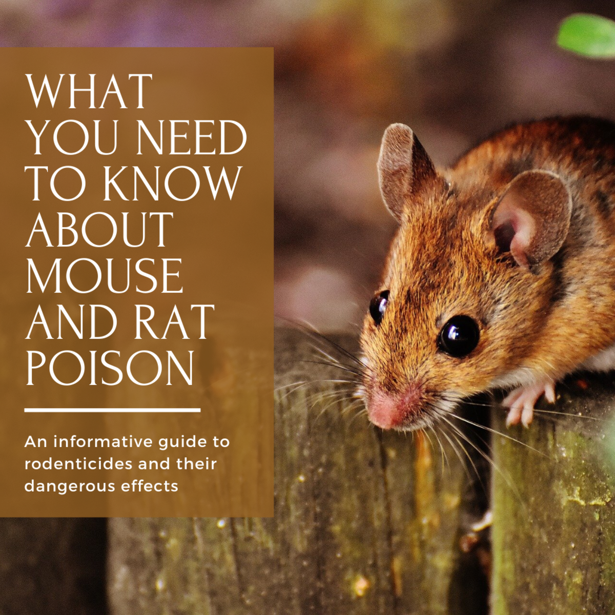 Mouse and Rat Poison:  What They're Not Telling Us