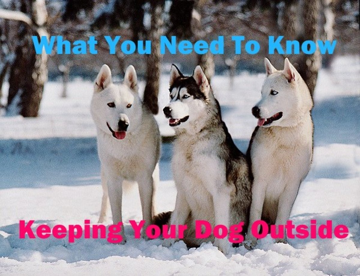 If you are planning on keeping your dog outside learn what he needs.