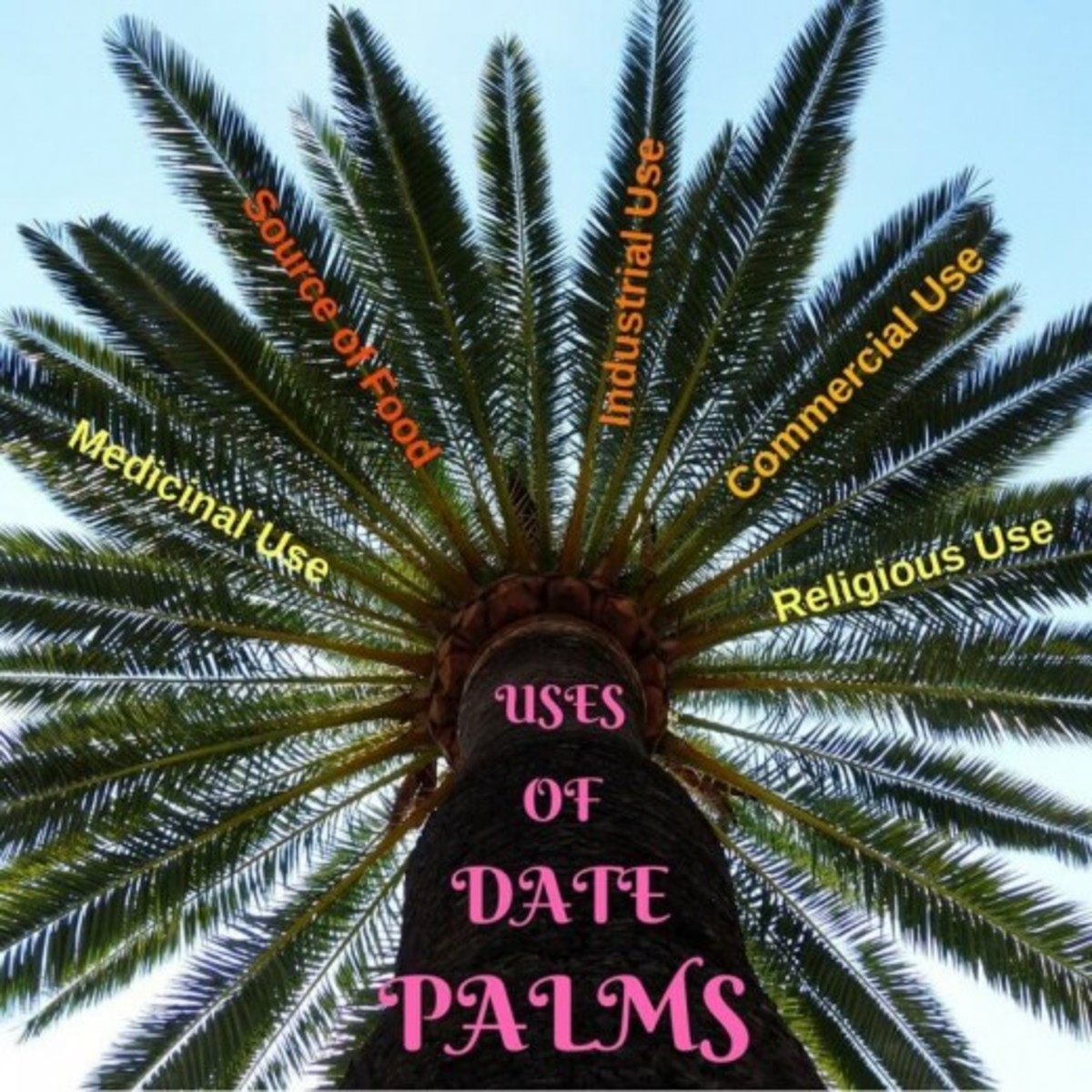 Benefits of date palm
