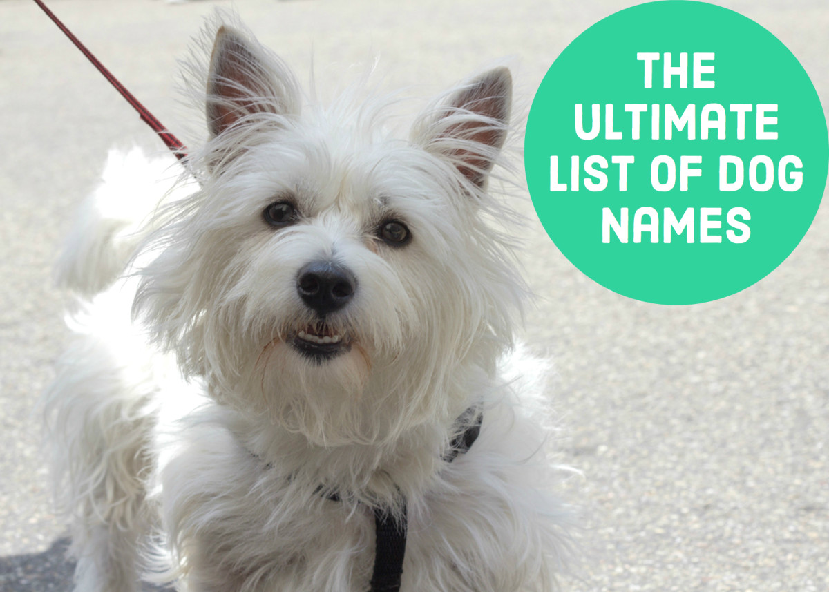 Dog Names: Dog Names: Hundreds Of Suggestions By Color, Breed, Size