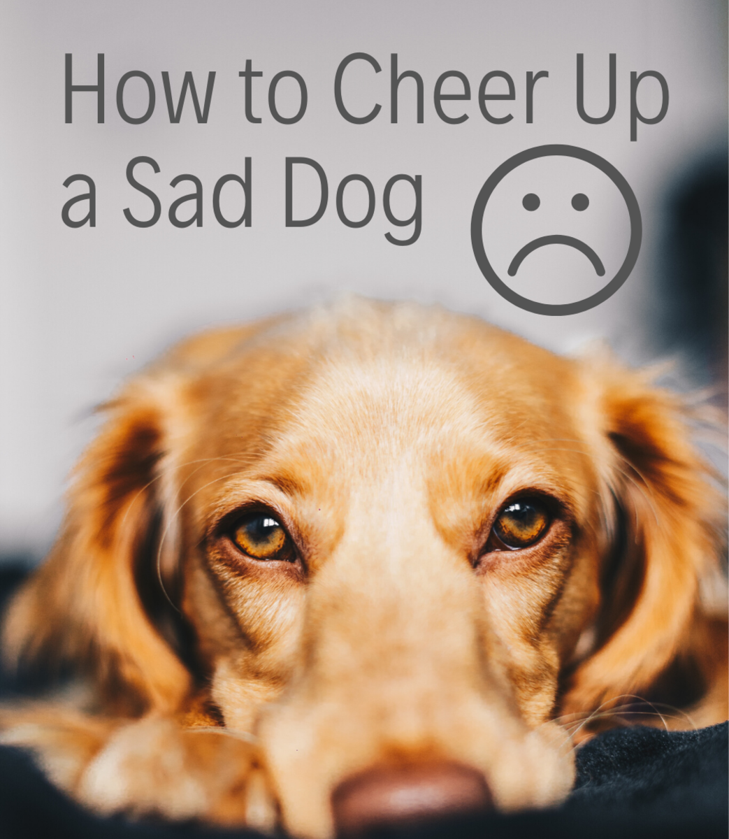 What to do if your dog is sad or depressed.