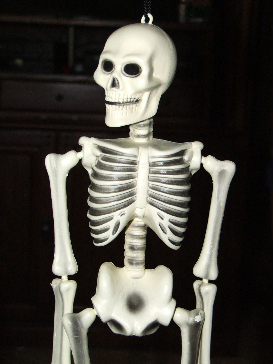 Our skeleton performs many vital jobs.