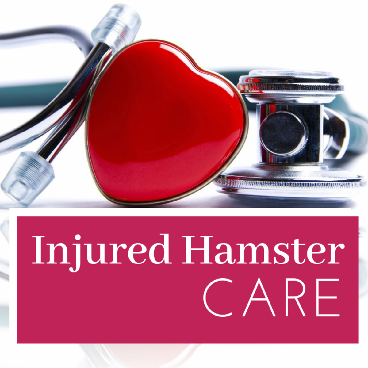 How to Care for an Injured Hamster