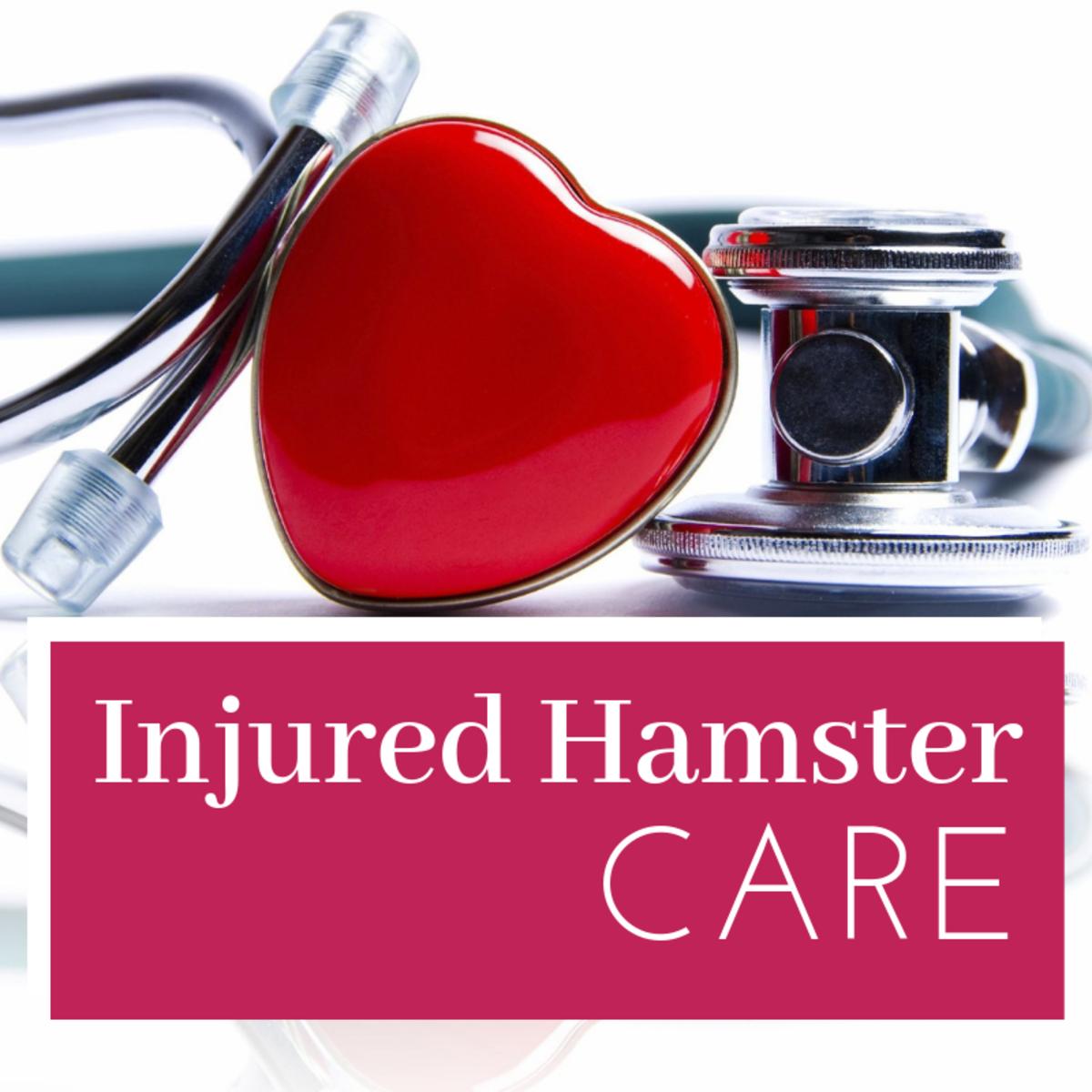 Injured Hamster Care