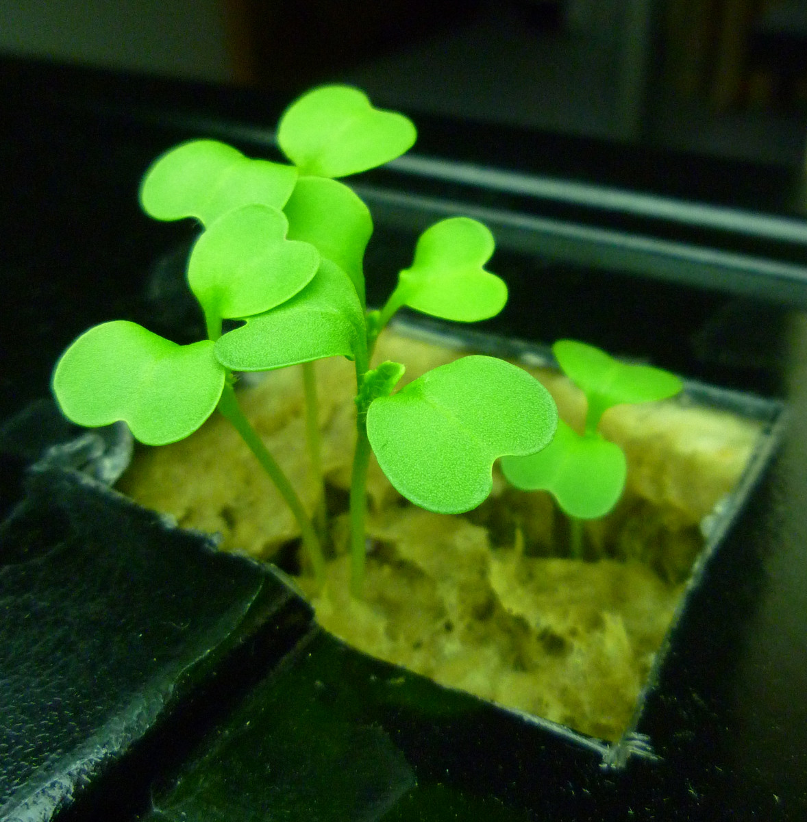 The Basics of Small Aquaponics