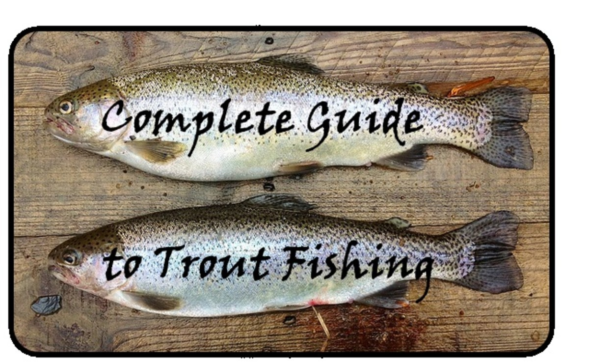 A Complete Guide to Fishing for Trout