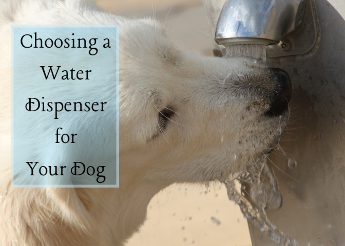 How to Choose the Best Dog Water Dispenser