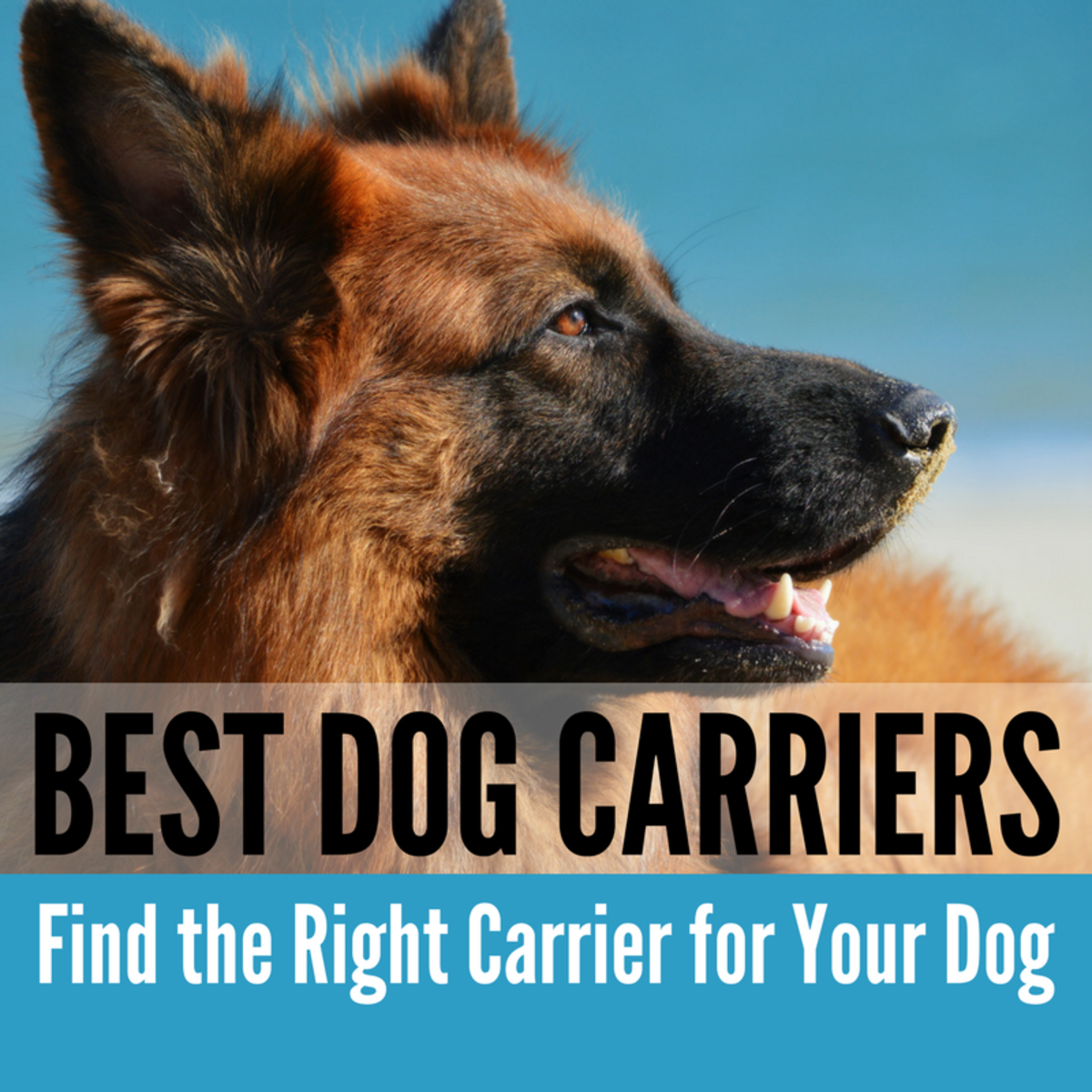 Here's everything you need to know about choosing the best size, style and brand of carrier for your dog.