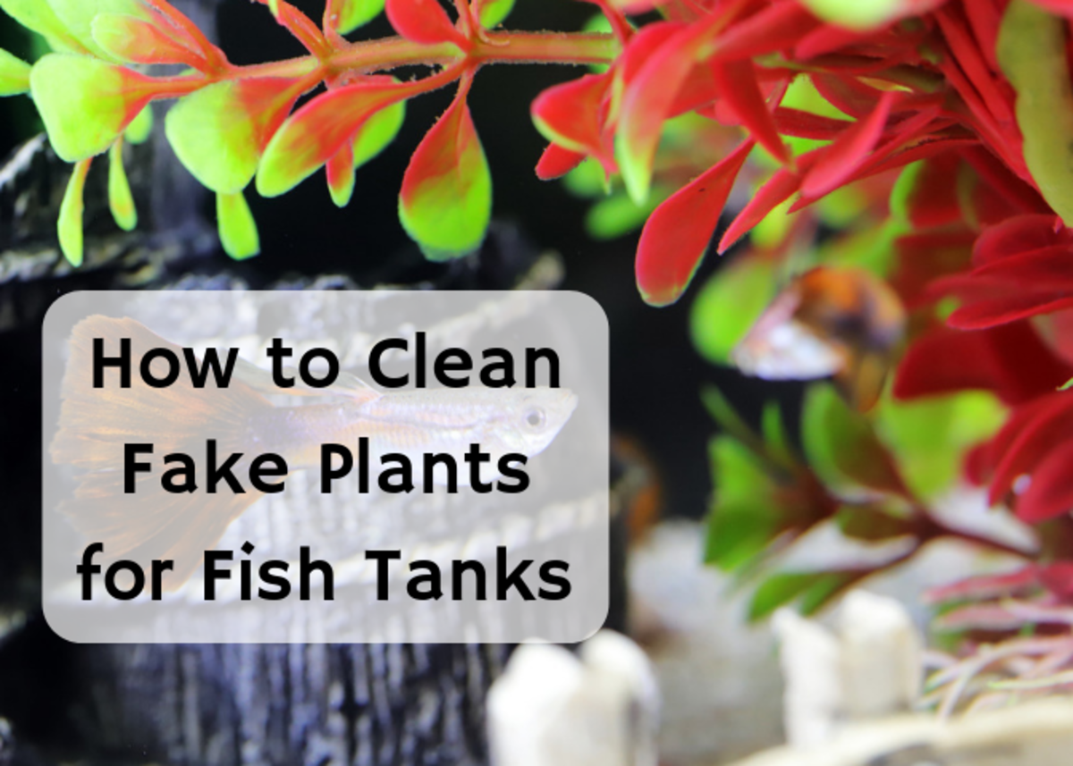 Learn how to clean your fish tank decorations safely.