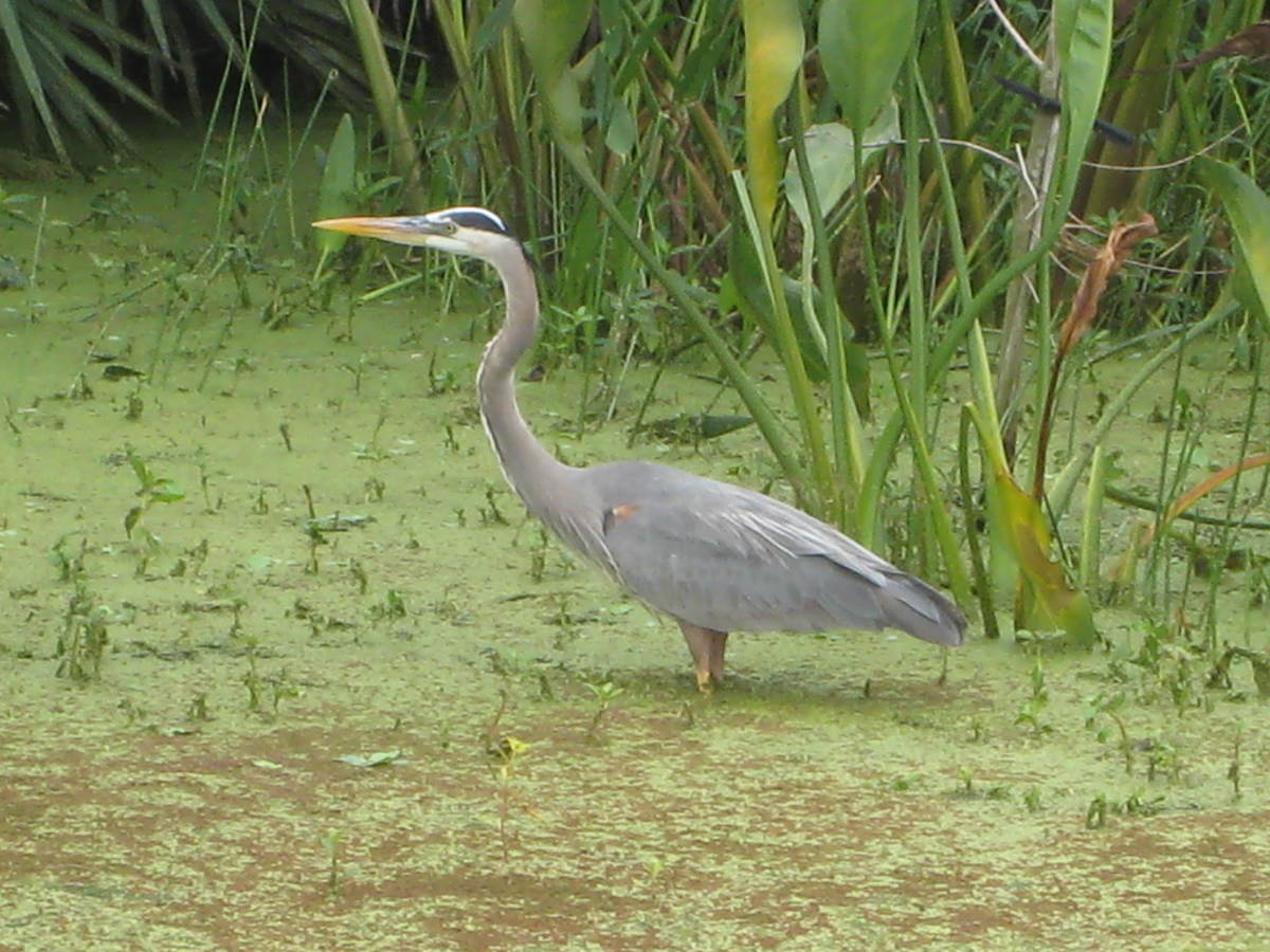 Florida's wildlife depends on the water supply to be there
