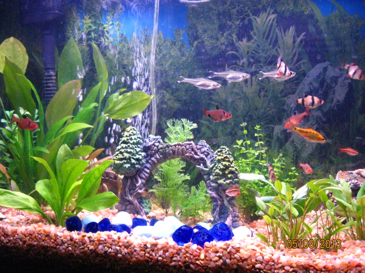 My freshwater aquarium with tropical fish