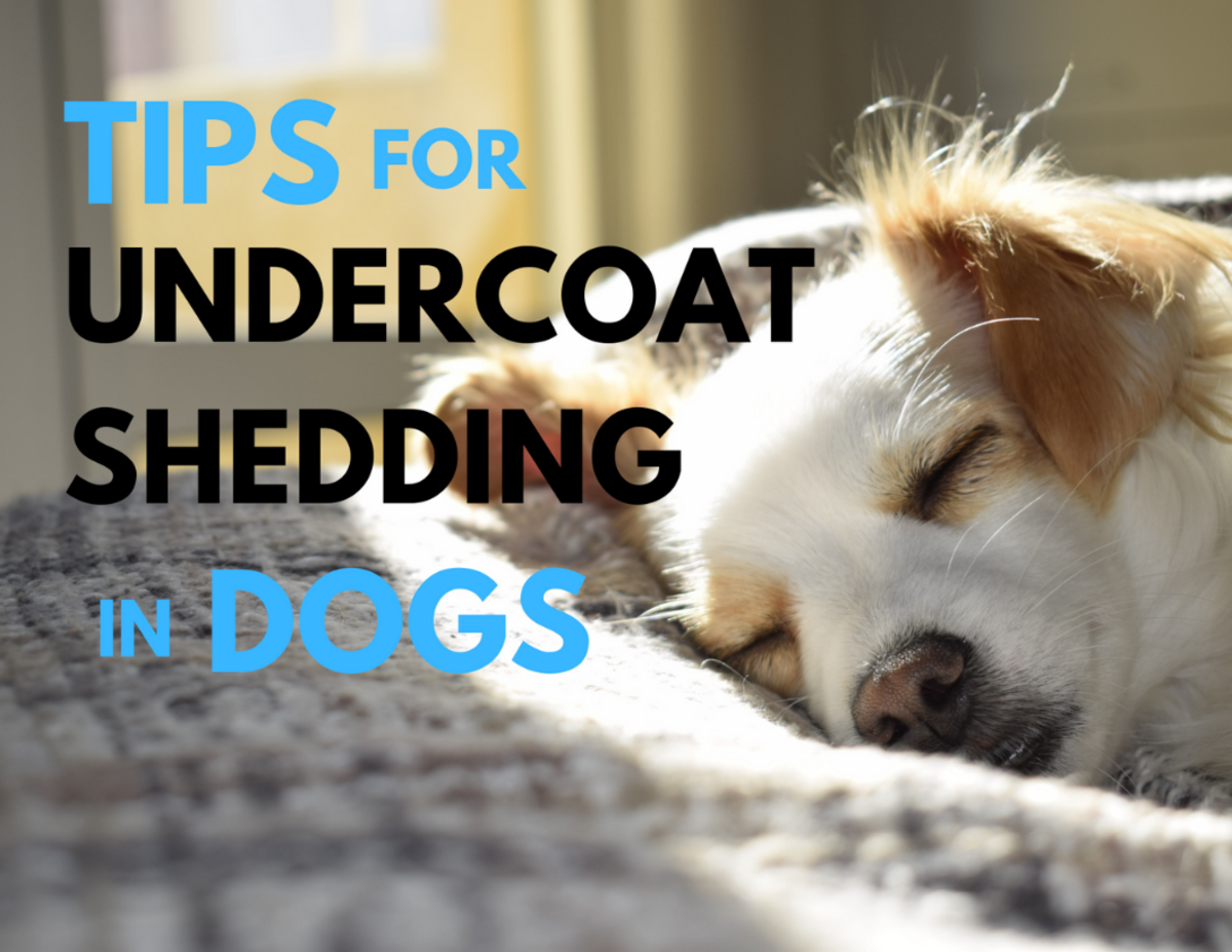 Buried in Fur: Tips to Deal With Dog Undercoat Shedding